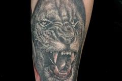 Tatouage lion peau déchirée