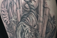 Tigre et bambou