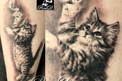 tatouage chat chaton